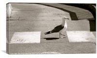 Seagull Crossing, Canvas Print