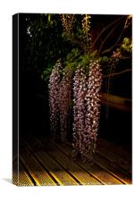 Wisteria at Dusk, Canvas Print