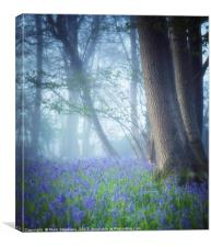 Bluebells In The Mist, Canvas Print