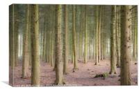 Sulham Woods, Canvas Print