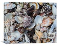 Sea Shell Collection, Canvas Print