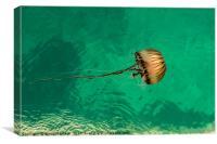Jellyfish #1, Canvas Print