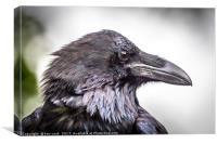 Portrait of a Raven, Canvas Print