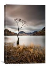 Buttermere Lone Tree Dawn, Canvas Print