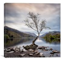 Llanberis Lone Tree, Canvas Print