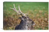 Majestic Deer, Canvas Print