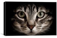 hunter cat, Canvas Print