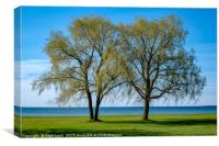 Two willows by the sea, Canvas Print
