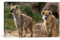 Pair of Spotted Hyena, Canvas Print