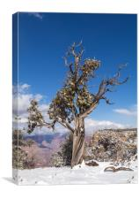 Gnarled Tree at edge of Grand Canyon, Canvas Print
