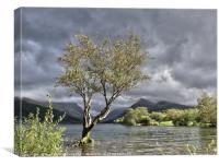 Padarn Lonely Tree , Canvas Print