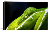 Green Tree Python, Canvas Print