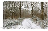 Snow in The Blean, Canvas Print