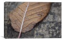 Fallen Autumn Leaf, Canvas Print