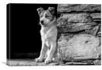 Skye the working sheepdog puppy in Black and white, Canvas Print