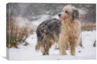 Judy snow dog, Canvas Print