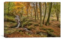 Nant Gwyllt Brook, Elan Valley, Canvas Print