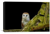 Welsh Barn Owl, Canvas Print