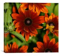 Ravishing Rudbeckia , Canvas Print
