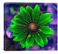 Rudbeckia in Green, Canvas Print