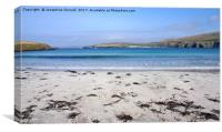 Tropical Shetland, Canvas Print