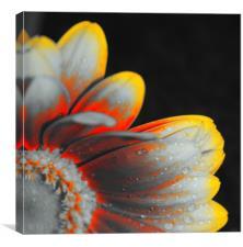 Close up, pop art flower, Canvas Print