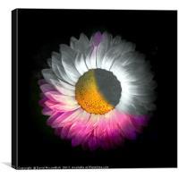 Floral Eclipse, Canvas Print