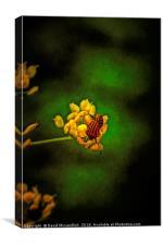 Striped Stink Bug, Canvas Print