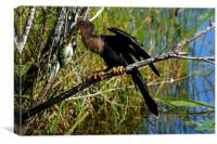 A Darters Meal, Canvas Print