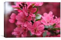 Pink Plum Blossoms, Canvas Print