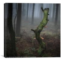 Death of a Tree, Canvas Print