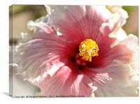 Heart of a hibiscus flower , Canvas Print
