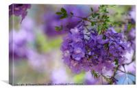 Jacaranda blooms , Canvas Print