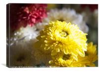 Colourful Chrysanthemums , Canvas Print