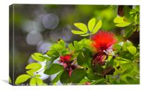 Tropical red bloom , Canvas Print