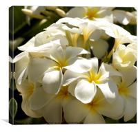 Frangipani bouquet , Canvas Print