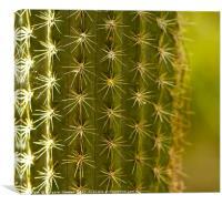 Cactus close up , Canvas Print