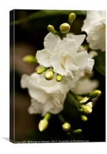 Romantic blooms , Canvas Print