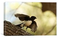Willy Wagtail Silhouette, Canvas Print