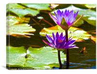 Water Lily Tropical Lagoon , Canvas Print