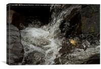 Effervescent mountain river , Canvas Print