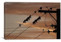 Cockatiel sunset , Canvas Print