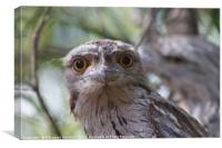 Owl like Eyes , Canvas Print