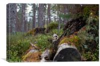 Autumn Woodland, Little Garve, Canvas Print