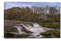 Cenarth Falls, Canvas Print