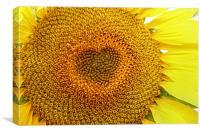 The sun flower heart , Canvas Print
