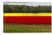 Tulip Fields - Narborough, Norfolk, UK, Canvas Print