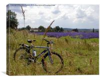 Lavender Fields (Lavandula), Canvas Print