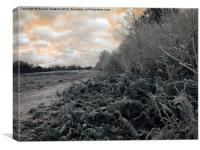 Frosty Morning on the Common, Canvas Print