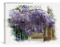 Wisteria (Fabaceae), Canvas Print